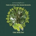 Celtic Lifetree Massage - Lebensbaum Buche